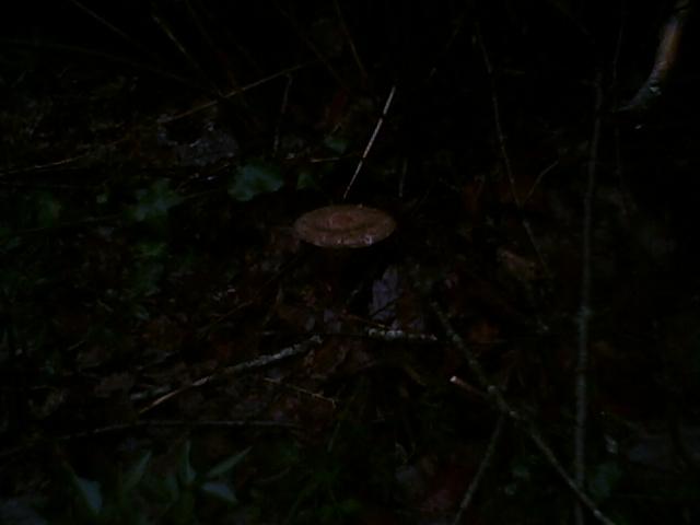 joli champignon le 01.01.12